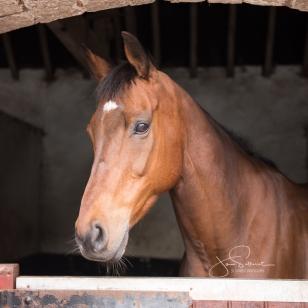 Horses-32.jpg